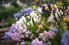 Can't decide which flowers to plant in your backyard? We've got you covered.