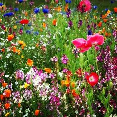 The great outdoors, beautiful wild flowers