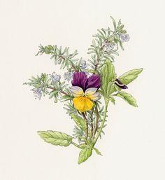 Floral, Artist, Flowers, Plants, Illustrations, Christmas, Decor, Florals, Yule