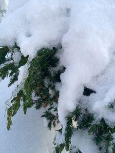 Прекрасный зимний день❄️❄️
