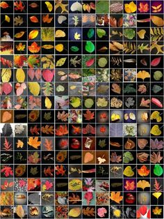 The Fallen Leaves by Annette Heist, NPR: Photos from listeners. Here is the gallery Beautiful Artwork, Beautiful Images, Beautiful Things, Autumn Leaves, Fallen Leaves, Photo Pattern, Plant Painting, Science And Nature, Life Science