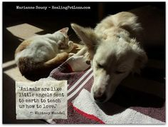 Animals are like little angels…