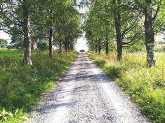 Yläpihan vanha koivukuja An old birch alley to Ylapiha Farm #Sivakka #Sivakkavaara #perisivakka #Valtimo #maaseutu #koivukuja #kylätie #birchalley #villageroad #countryside Sidewalk, Country Roads, Tie, Travel, Viajes, Side Walkway, Cravat Tie, Walkway, Ties