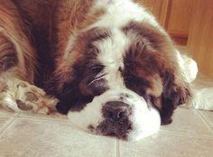 Squishy sleepy Maggie