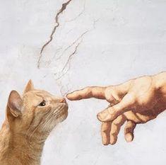are you small :) - CAT> things - Katzen - Cat Wallpaper Crazy Cat Lady, Crazy Cats, I Love Cats, Cool Cats, Regard Animal, Aesthetic Art, Cat Art, Art And Illustration, Illustrations