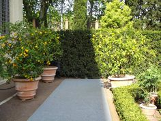 The Italian Renaissance of the botanical gardens  http://erbeitalianskincare.blogspot.it/2014/05/the-italian-corridor-leading-us-towards.html