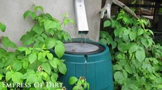 Collect water with a rain barrel