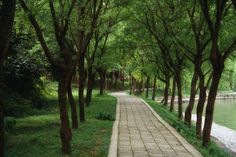 Trees in green infrastructure offer comprehensive solutions to rainfall interception, stormwater management, pollutant control, and water use issues. Discover more: http://citygreen.com/2014/04/29/controlling-stormwater-runoff-with-trees/