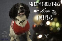 We posted on Instagram: Merry Christmas!  #christmas #spanielintheworks #dog #christmasjumper