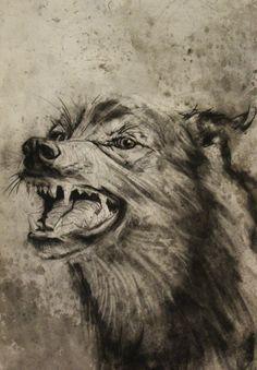 Wolf drawing Alex Landerman