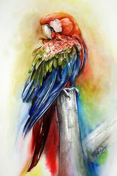 parrot / watercolor painting Watercolor Bird, Watercolor Animals, Watercolor Illustration, Watercolor Paintings, Watercolors, Parrot Painting, Peacock Painting, Painting & Drawing, Poster Color Painting
