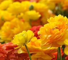 Yellow flowers in the big garden - beautiful perfume - Free Image Download - High Resolution Wallpaper