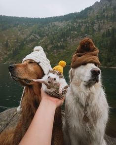 When the family photo doesnt come out quite right but its still cute. Cute Little Animals, Cute Funny Animals, Funny Dogs, Hedgehog Pet, Cute Hedgehog, Cute Puppies, Cute Dogs, Dogs And Puppies, Doggies