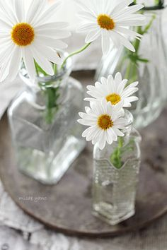 just LOVE daisies