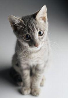 Kleine Tierkinder, große Augen - Kleine Tierkinder, große Augen, jetzt auf…