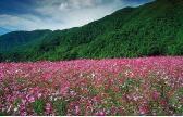 Gardens In The Piedmont - North Carolina Gardens & Arboretums – North Carolina Travel & Tourism