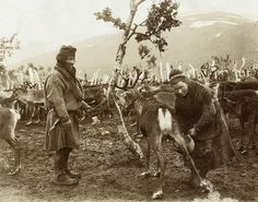 sami nomads | Sami Swedish nomad Sami 1880 - 1920 | Flickr - Photo Sharing!