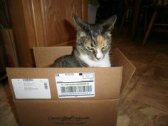And Now, 10 Cranky Cats in Boxes 3. Go Away