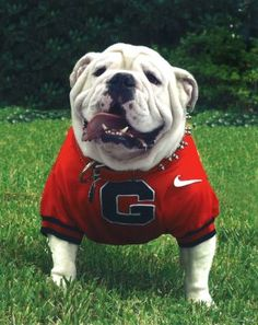 Uga has been named the #1 Most Lovable College Mascot by NCAA!
