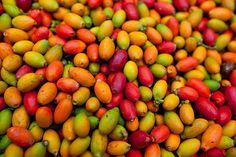 Raw coffee beans by John White - Bali, Indonesia