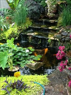 Jackie and E's Koi and goldfish pond