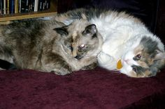 Cats on chaise