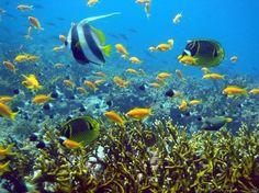 Marine life / Zanzibar