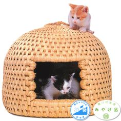 Handmade neko chigura cat basket. If I could only read Japanese and order one of these and have it shipped here to America....新潟県観光みやげ品推奨、関川村推奨みやげ品