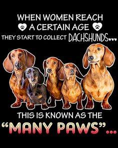 Dachshund – Friendly and Curious Dachshund Quotes, Dachshund Art, Dog Quotes, Piebald Dachshund, Wire Haired Dachshund, Daschund, Miniature Dachshunds, Weenie Dogs, Doggies