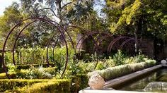 Image result for jasmine plant on trellis