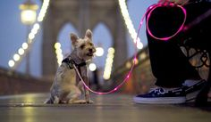 Check out my groovy glowing leash!!