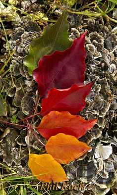 ༺♥༻color, autumn༺♥༻