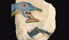 'Hammerhead' Dinosaur Is The Oldest Herbivorous Marine Reptile | Asian Scientist Magazine | Science, Technology and Medicine News Updates From Asia