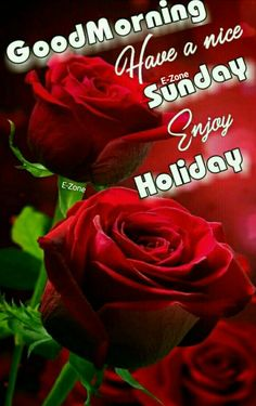 Good Morning Flowers, Good Morning Wishes, Happy Sunday, Blessings, Blessed, Holiday, Vacations, Holidays, Vacation