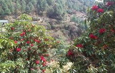 Join this tour in Kathmandu - Panorama Poon Hill Trek: Private Guide