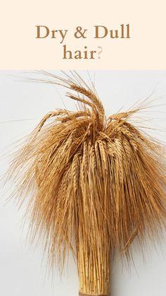 Natural Hair Growth, Natural Hair Styles, Dry Hair Treatment, Diy Shampoo, Diy Hair Mask, Dull Hair, Dandelion, Conditioner, Flowers