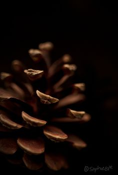 de color marrón (brown)
