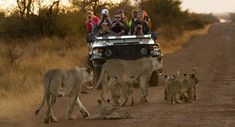 Explore Victoria Falls and Chobe on this adventure safari. Spend your time exploring Victoria Falls, the highlights, Chobe River & Chobe National Park. Best Boutique Hotels, A Boutique, Chobe National Park, National Parks, White River Rafting, Herd Of Elephants, Game Lodge, Victoria Falls, Game Reserve