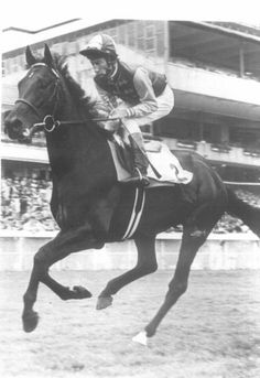 """Nijinsky II, son of Northern Dancer, won the English Triple Crown in 1970 with Lester Piggott riding. Though born in Canada, he earned his fame in Europe and became a prolific stallion to solidify his reputation as one of the greatest thoroughbreds ever. In 1970, a film was made on his life, """"A Horse Called Nijinsky."""" He died at age 25 in 1992."""