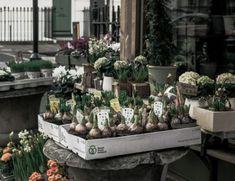 Marta Malheiro, Author at Revista Jardins - Página 2 de 5 Planting Seeds, Planting Succulents, Shabby Chic, Home Remedies, Herbal Remedies, Medicinal Plants, Botanical Gardens, Herbalism, The Cure