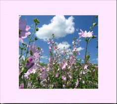 """""""Wild Mallow In The Skies"""" - by Natalia Levis-Fox"""