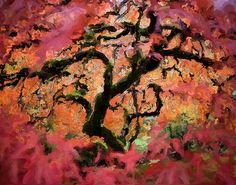 Japanese Maple...ink & paint...a Bent original