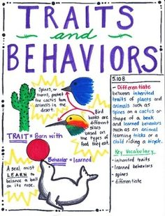 This Traits and Behaviors poster is designed to aide students in understanding that offspring inherit certain traits from their parent. Animals can also be taught certain skills. These skills tat are taught to the animal are NOT inherited from the parent.