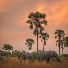 """Glorious light at dusk in Chief's Island, Botswana. The elephants were the extra bonus""    #EarthCapture by @wild.anjadenker"