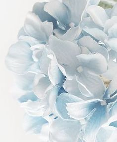 Light blue and white flower for Maddie xx Light Blue Aesthetic, Blue Aesthetic Pastel, Flower Aesthetic, Light Blue Flowers, White Flowers, Hortensia Hydrangea, Blue Hydrangea, Hydrangeas, Everything Is Blue