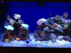 Dr.Chitnis's reef installation by TropiCo Aqua