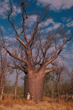 national geographic photos of trees 995845 tree tops pinterest. Black Bedroom Furniture Sets. Home Design Ideas