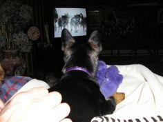 Alfie watching T.V.