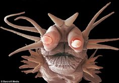 Monsters of the deep: Tiny sea creatures that never see sunlight look like they're from another planet
