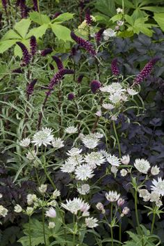 My Favorite Plant Combinations 17 #Cottagegardens